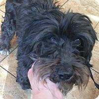 Adopt A Pet :: Carly - Oak Ridge, NJ