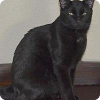 Adopt A Pet :: Akila - Buhl, ID
