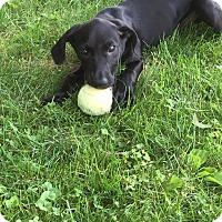 Adopt A Pet :: Pate - New Oxford, PA