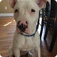 Adopt A Pet :: Lucky - Uxbridge, MA