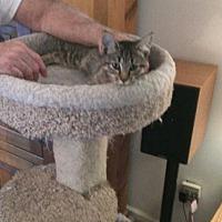 Adopt A Pet :: Benji - Fayetteville, TN