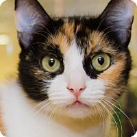 Adopt A Pet :: Leia - Irvine, CA