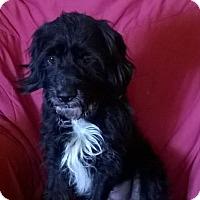Adopt A Pet :: Bosco - Campbell, CA