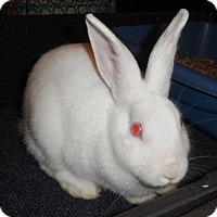 Florida White for adoption in Newport, Kentucky - Skylar