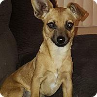 Adopt A Pet :: Zoe - Mesa, AZ
