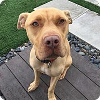 Adopt A Pet :: CHARLIE - Courtesy - Los Angeles, CA