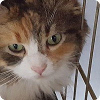Adopt A Pet :: Not sure yet - Chesterfield, VA
