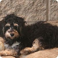 Adopt A Pet :: Hewitt - Woonsocket, RI