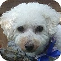 Adopt A Pet :: Tori - La Costa, CA