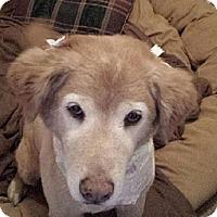Adopt A Pet :: Lily - Charleston, SC