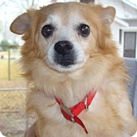 Adopt A Pet :: PRANCER - Raleigh, NC