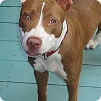 Adopt A Pet :: Dulce - Tallahassee, FL