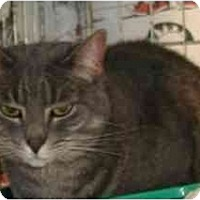 Adopt A Pet :: Connor - Clementon, NJ
