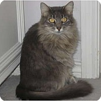 Adopt A Pet :: Millie - Huffman, TX