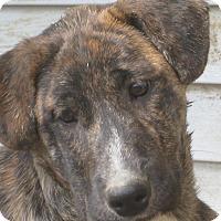 Adopt A Pet :: Marti - Portland, ME