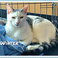 Adopt A Pet :: Winter - Arcadia, CA