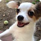 Adopt A Pet :: Spy (in Alabama)