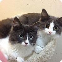 Adopt A Pet :: Clara - Santa Rosa, CA