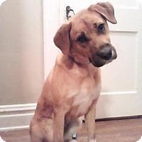 Adopt A Pet :: Maya - Baden, PA