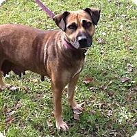 Adopt A Pet :: Dani - Summerville, SC
