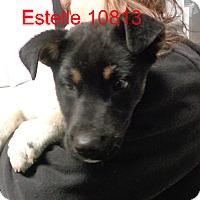 Adopt A Pet :: Estelle - baltimore, MD