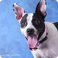 Adopt A Pet :: Camille - Miami, FL