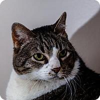 Adopt A Pet :: EMMIE - Decatur, GA