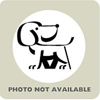 Adopt A Pet :: Buster - Menands, NY