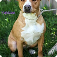 Adopt A Pet :: Yahtzee - Bloomington, MN