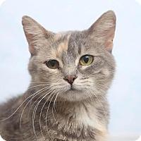 Adopt A Pet :: Apollonia - Chippewa Falls, WI