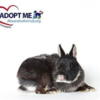 Adopt A Pet :: Templeton - Alexandria, VA