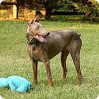Adopt A Pet :: SAHARA - Greensboro, NC