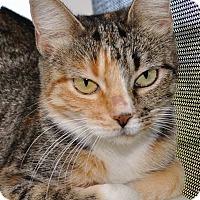 Adopt A Pet :: Siren - Georgetown, TX