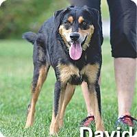 Adopt A Pet :: David - Ottumwa, IA