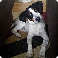 Adopt A Pet :: Hector - Racine, WI