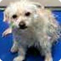 Adopt A Pet :: Gwen-ADOPTION PENDING - Boulder, CO