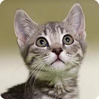 Adopt A Pet :: Sophia - Red Bluff, CA