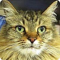 Adopt A Pet :: Fizz - Sherwood, OR