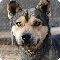 Adopt A Pet :: Hank - Harrisonburg, VA