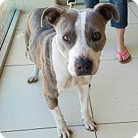 Adopt A Pet :: Stormy - Culver City, CA