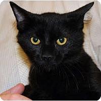 Adopt A Pet :: Dhani - Monroe, GA