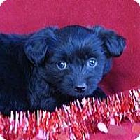 Adopt A Pet :: SIMONE - Torrance, CA