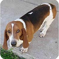 Adopt A Pet :: Cory - Phoenix, AZ