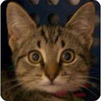 Adopt A Pet :: Mia - Annapolis, MD