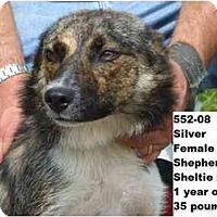 Adopt A Pet :: Silver - RESCUED! - Zanesville, OH