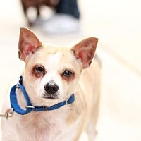 Adopt A Pet :: Spanky - Morganville, NJ