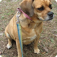 Adopt A Pet :: Miskey - Orange Park, FL