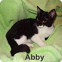 Adopt A Pet :: Abby BW - Bentonville, AR