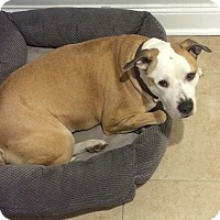 Adopt A Pet :: Haze - Willingboro, NJ