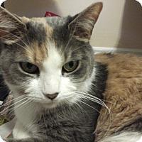 Adopt A Pet :: Callie - Toronto, ON
